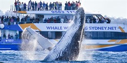 WIN 1 of 2 Three Hour Discovery Whale Watching Cruise Family Passes